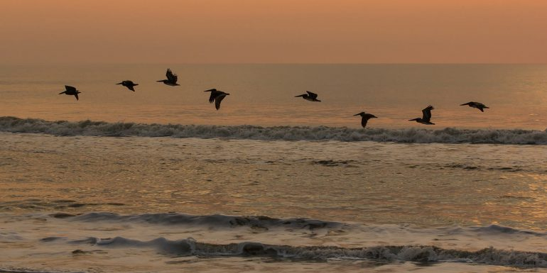 Pelicans flying over the ocean waves