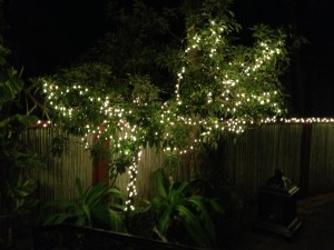 Christmas in Florida - Lights