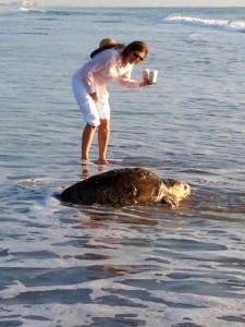 View sea turtle sightings near our Melbourne Beach b&b.