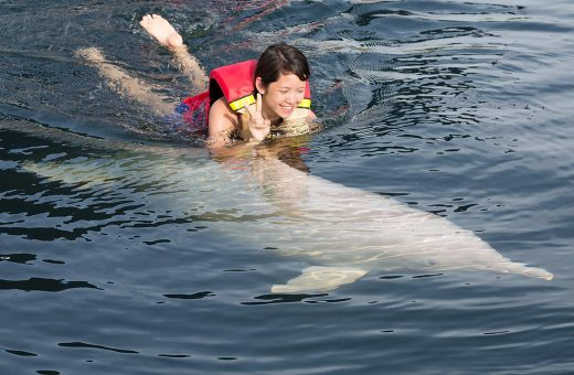 Girl swimming with a dolphin