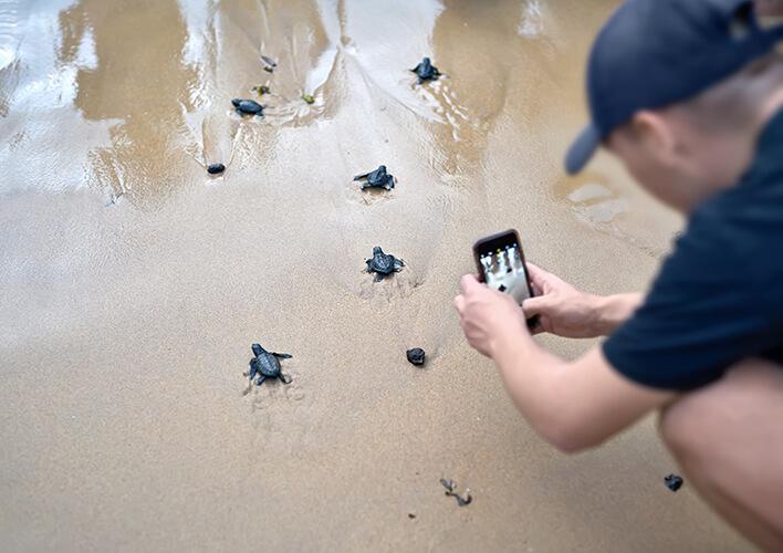 sea turtles hatching in florida
